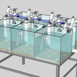 image of a mussel tank study