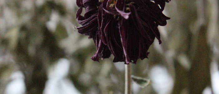 photo of a flower